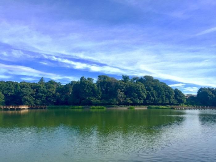 橿原神宮の池
