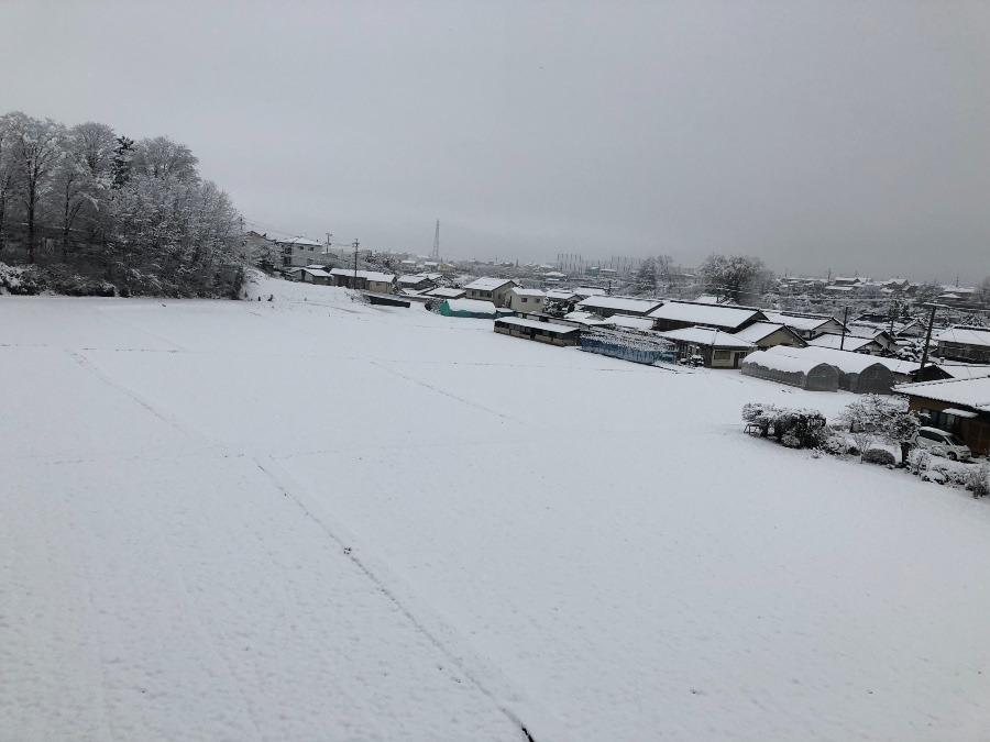 初雪が積もりました!